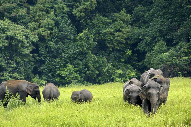Day 1 - Pattaya to Khao Yai National Park
